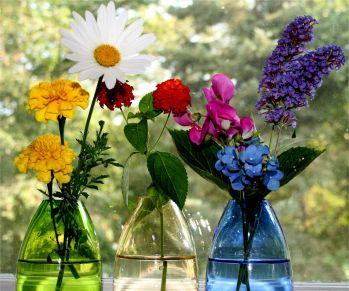 Как определить своё счастливое растение и вырастить удачу