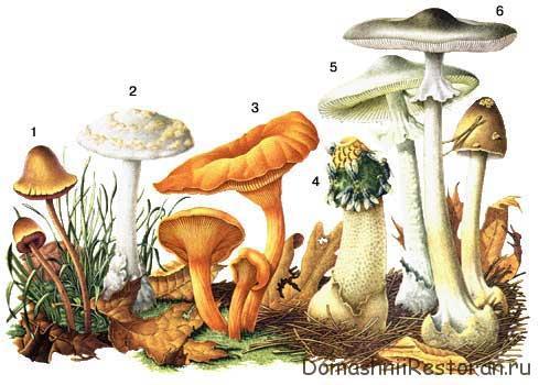 ядовитые грибы таблица 1