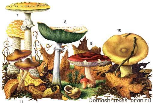 ядовитые грибы таблица 2