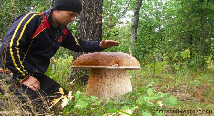 супер гриб