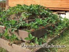 Как выращивать клубнику в пирамидах