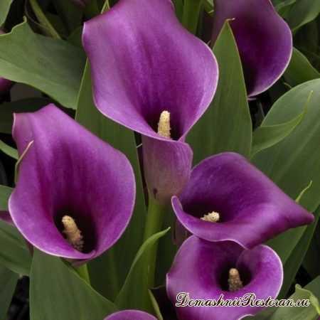 Теневыносливые комнатные растения и их фото  Мой цветник!