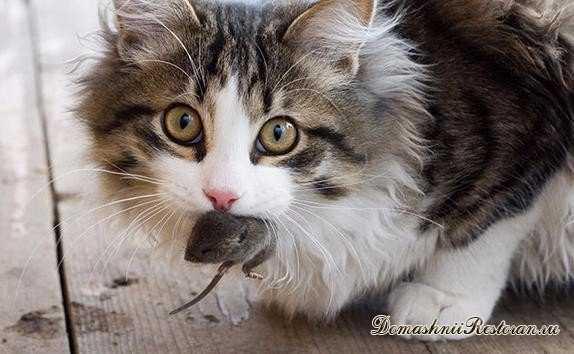 кошки приносят нам мышей