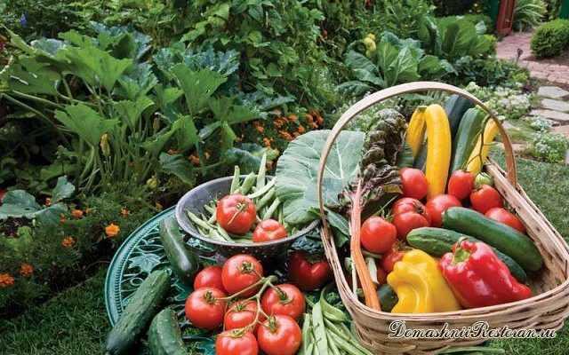 Гениальные хитрости огородников