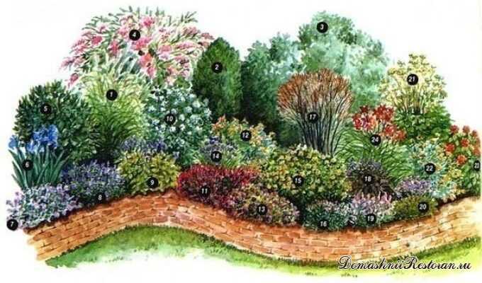 Пряные травы для смешанного бордюра
