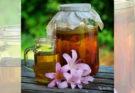 интересные факты о чайном грибе