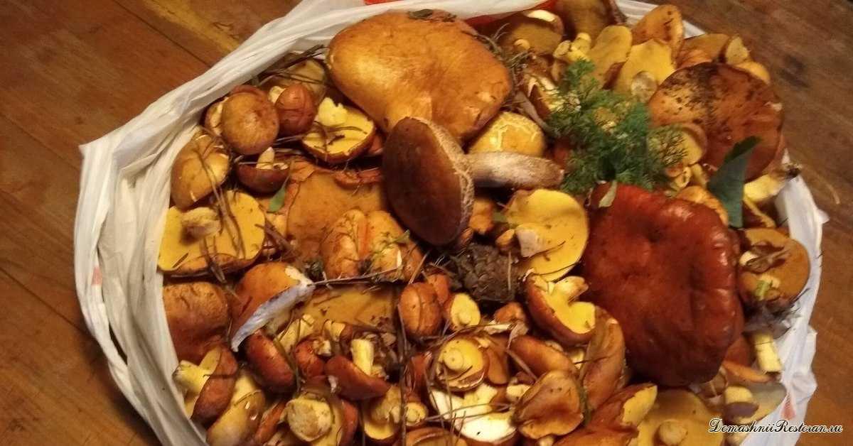 Как и когда собирать грибы