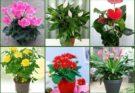 Секреты по уходу за цветами