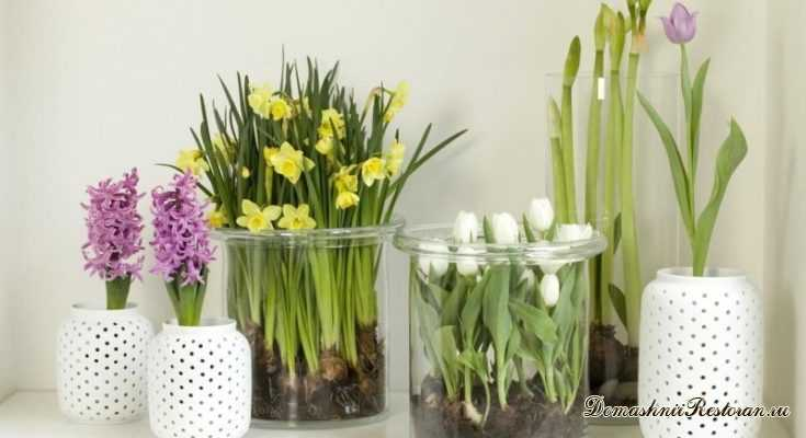 Живые цветы - к Новому Году