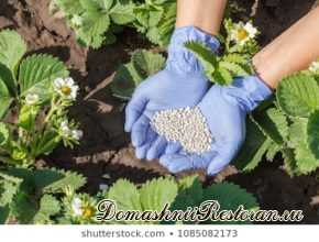 Как использовать минеральные удобрения и их основные виды