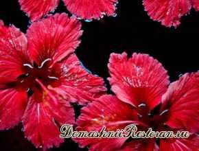 Эписция-комнатный цветок