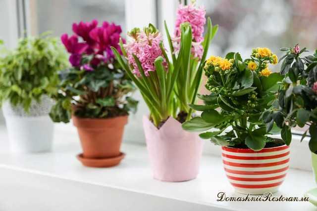 12 эффективных способов удобрить домашние цветы