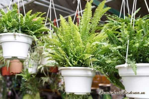 Топ-13 комнатных растений, которые как магнит притягивают в дом деньги и удачу✿Какие домашние цветы привлекают деньги✿
