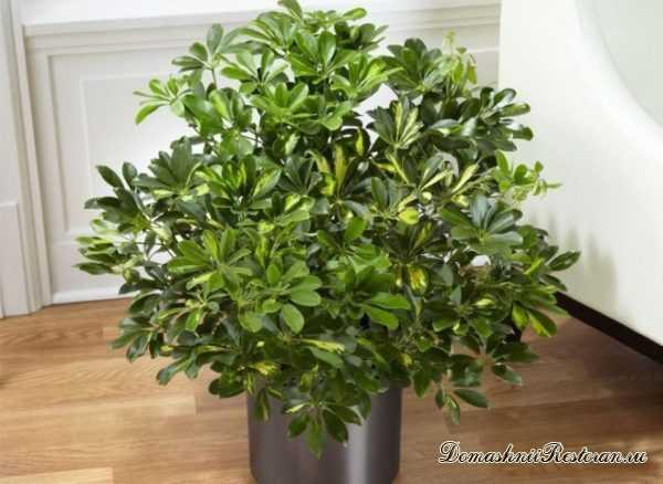 Лучшие Комнатные Растения, которые очищают воздух в доме