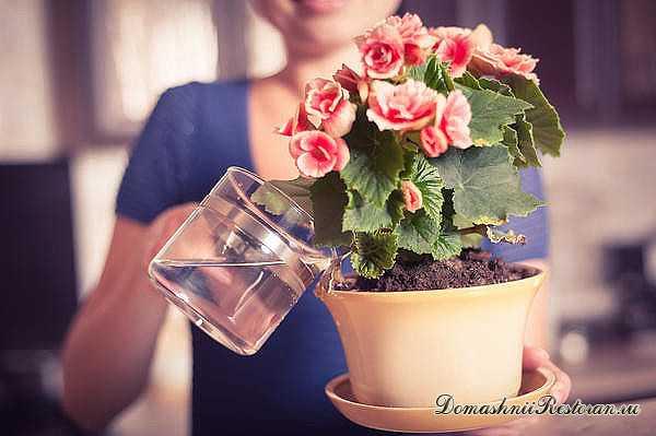 Всего 8 приемов, чтобы Комнатные Цветы росли как на дрожжах